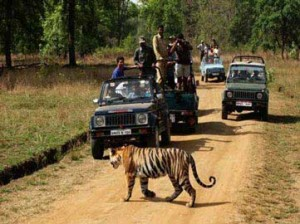 Jim-Corbett-Park-Weekend-Tour-Package-[By-Surface]